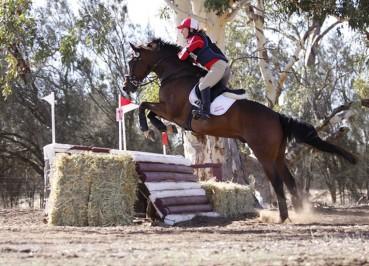 Tracey Lane Equestrian